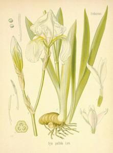 Indagine sui Botanical Italiani