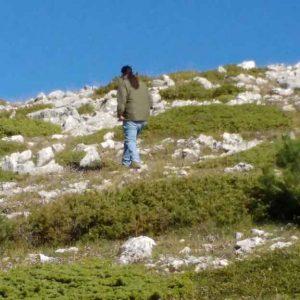 Juniperus-Communis-sub.-Horizontalis-(Nana)